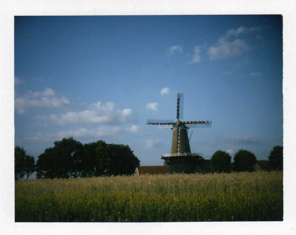 Dutch summer scape.